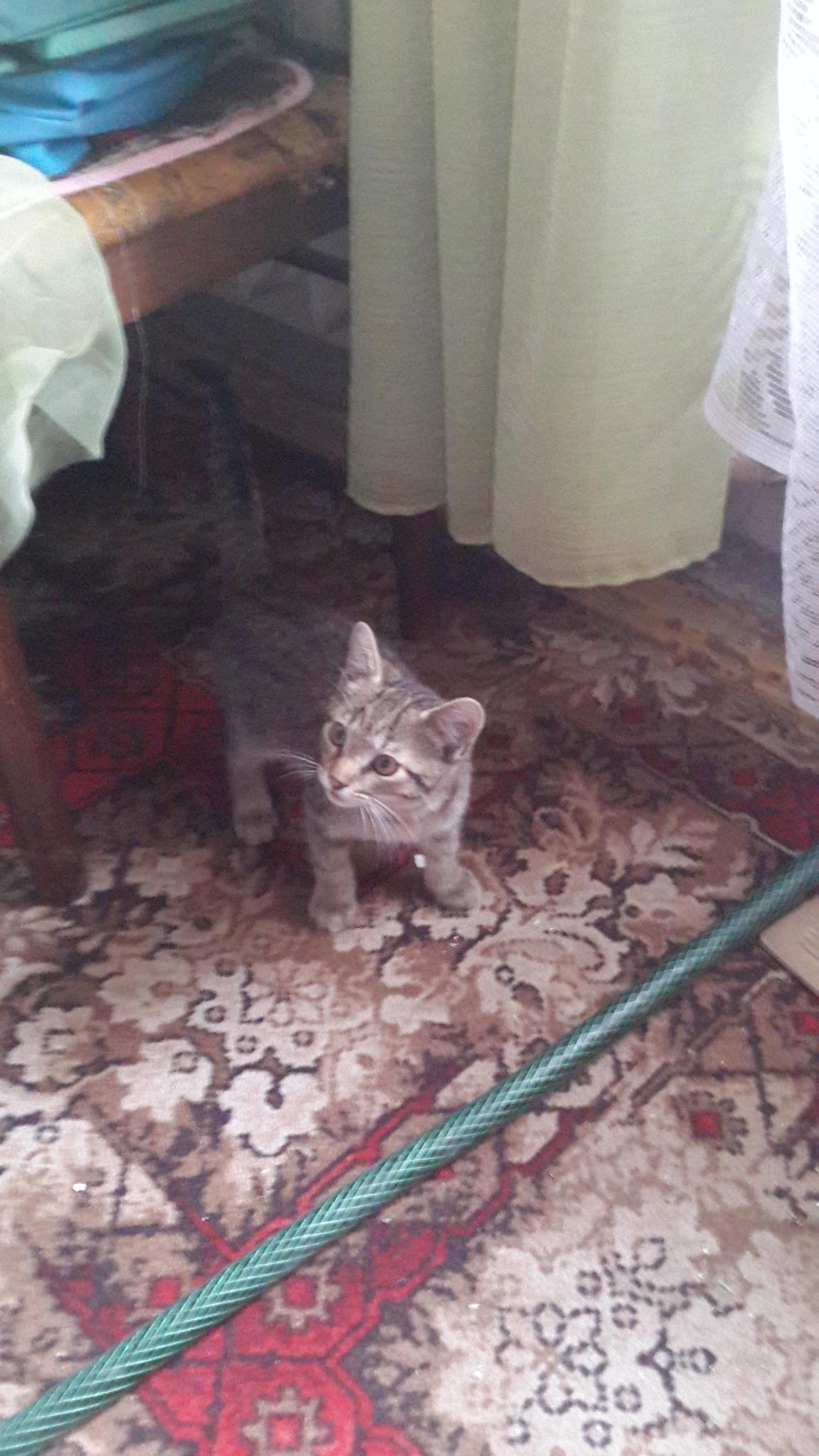Доска объявлений Купля, продажа, даром щенки и котята ...