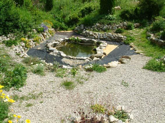Дом, сад и пруд в саду.... - фото 15