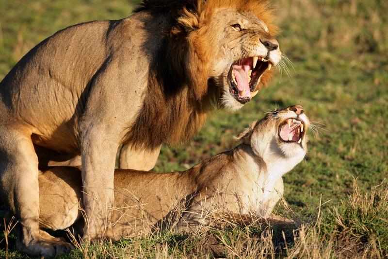 Зато его внимание гарантирует ряд бонусов лев в отношениях.