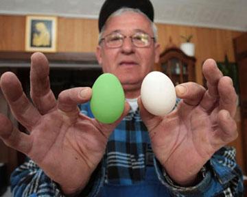 1 5 курицы несут яйца: