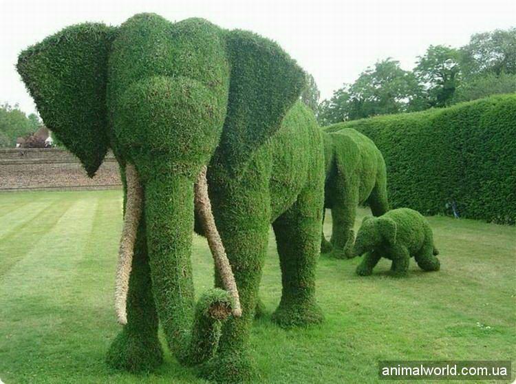 Топиари искусство зеленых скульптур