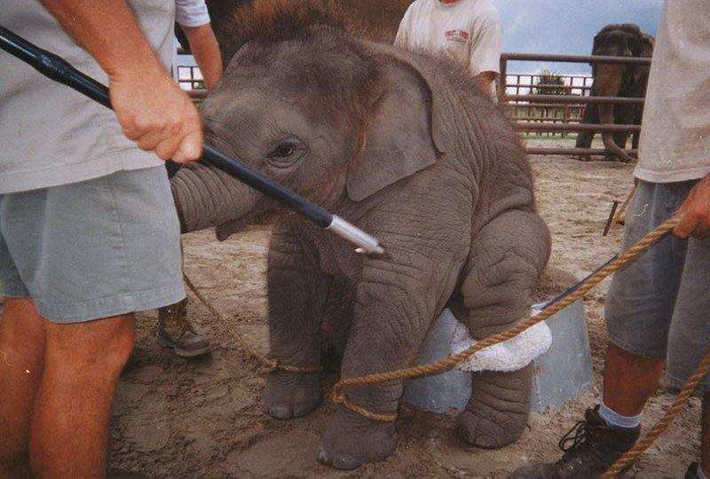 Растить слона в цирке – все равно, что растить ребенка в тюрьме.