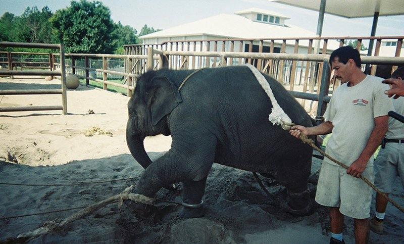 Сейчас уже многим известно, как на самом деле тренируют животных для выступления в цирке «Ringling Bros.». Но никто ничего так и не предпринял.