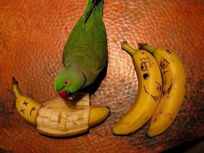 Овощное творчество 2