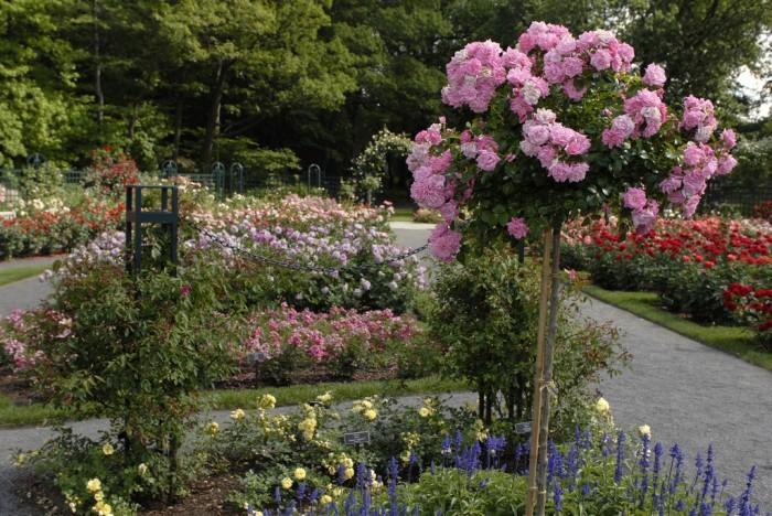 Сад роз Пегги Рокфеллер