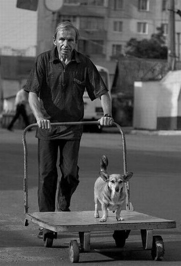 Собака друг и компаньон человеку