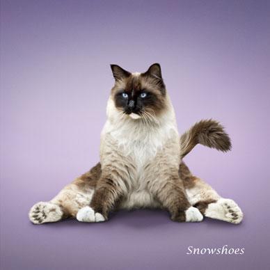 http://animalworld.com.ua/images/2009/December/Raznoe/Kotenok/Yoga-loving_cats-8.jpg