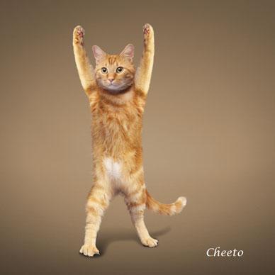 http://animalworld.com.ua/images/2009/December/Raznoe/Kotenok/Yoga-loving_cats-9.jpg