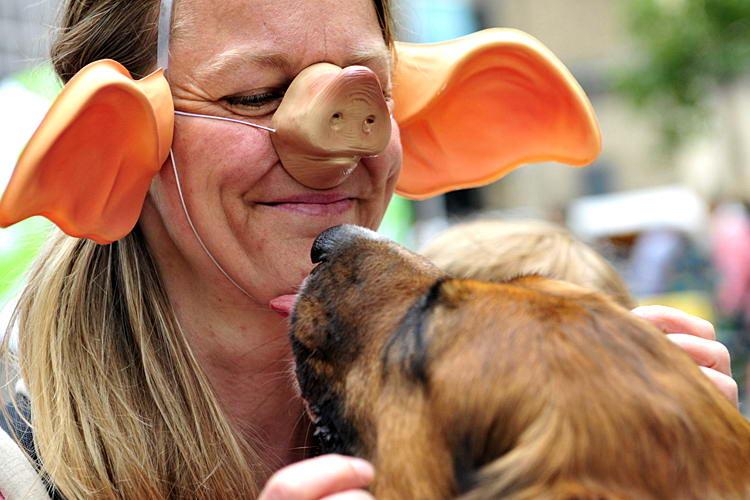 сменшные и забавные фотографии животных
