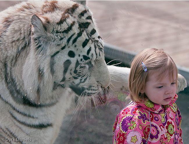 Фотографии животных снятых в зоопарках за стеклом.