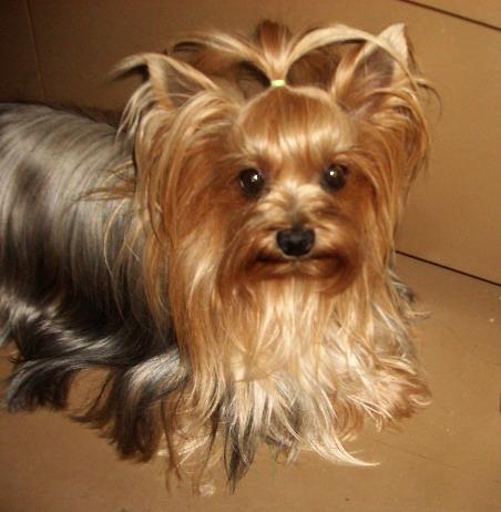 http://animalworld.com.ua/images/2009/June_09/Animal/Dog_mini/Dog_5.jpg