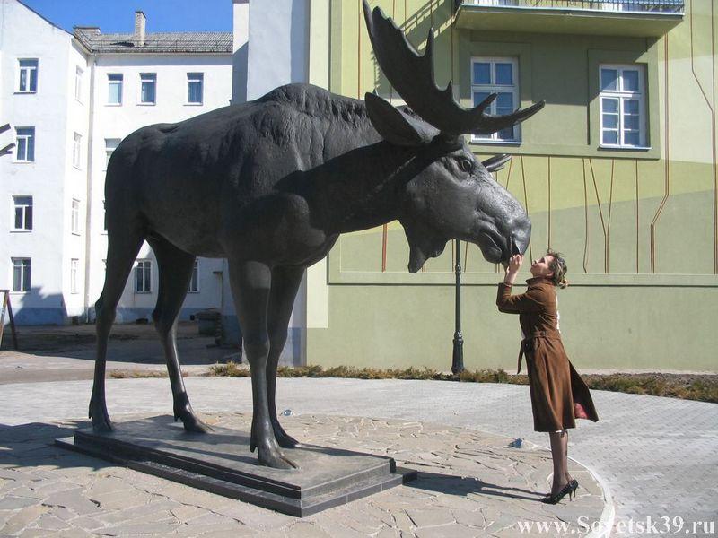 Памятник лосю. Калининград.