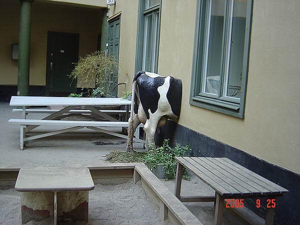 корова и стена