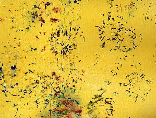 Моль жуки пауки мухи пчелы бабочки