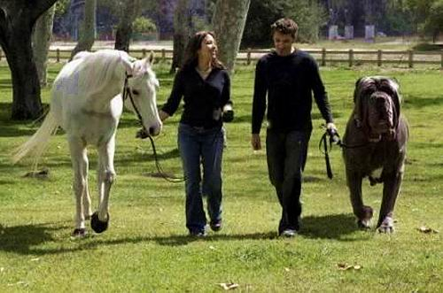 Геркулес - английский мастиф, весит 128 кг и имеет 96-сантиметровую шею.