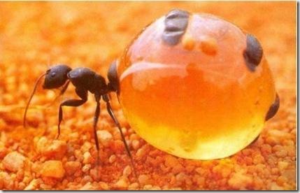 самые опасные паразиты для человека фото