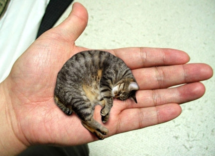 Мистер Пибблз (Mr. Peebles) – самый маленький кот в мире