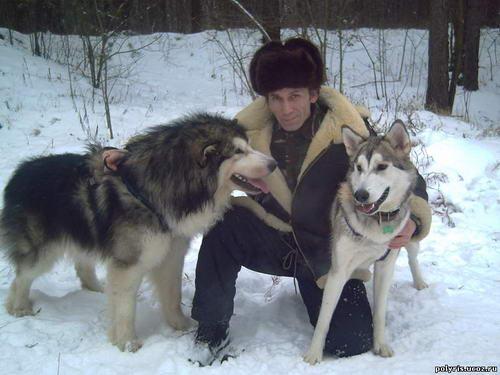 фото гибрид собаки и волка