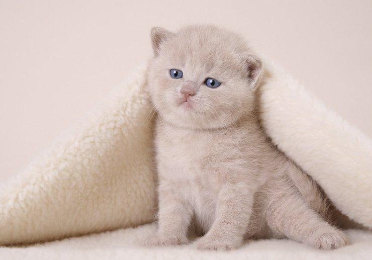 Забавные котята фотопозитив