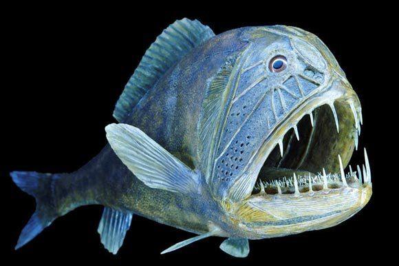 Жизнь под водой - глубоководные обитатели