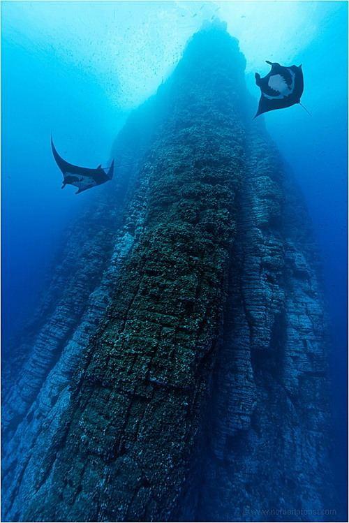 Норберт Пробст и его подводный мир