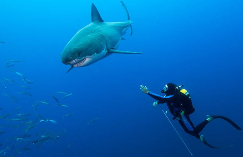 фото акулы улыбка
