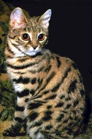 кошки мира фото - фотография 1.