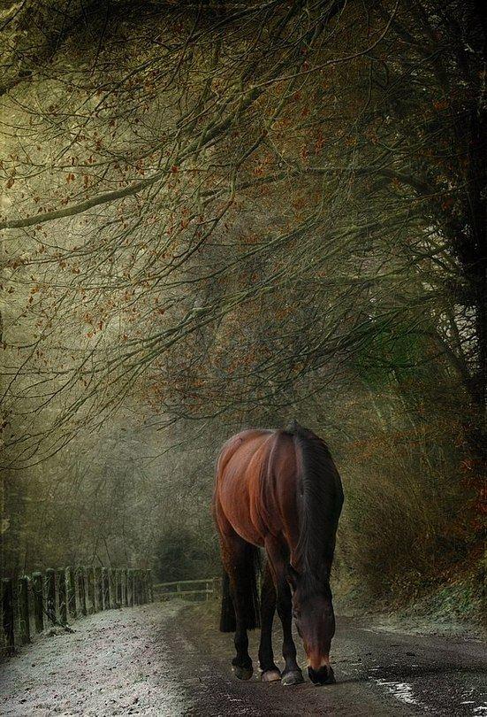лошадь животное