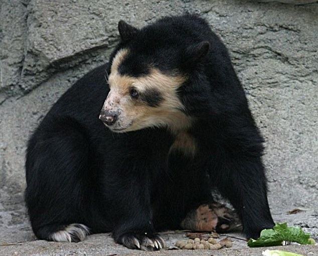 Еще недавно Долорес - так зовут эту медведицу - была пушистой...