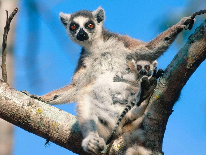 Животные: мамки и детки