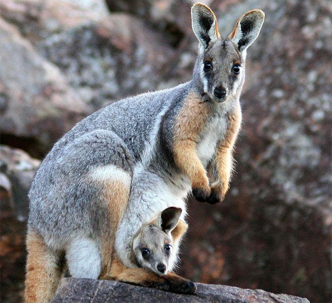 http://animalworld.com.ua/images/2009/November_09/Foto/Animal_mother_baby/Animal_mother_baby_16.jpg