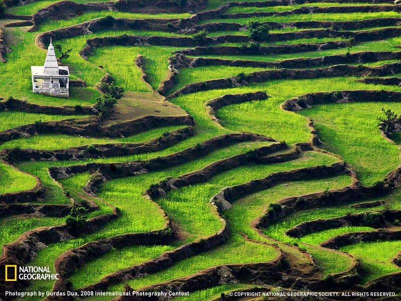 Террасы Индии
