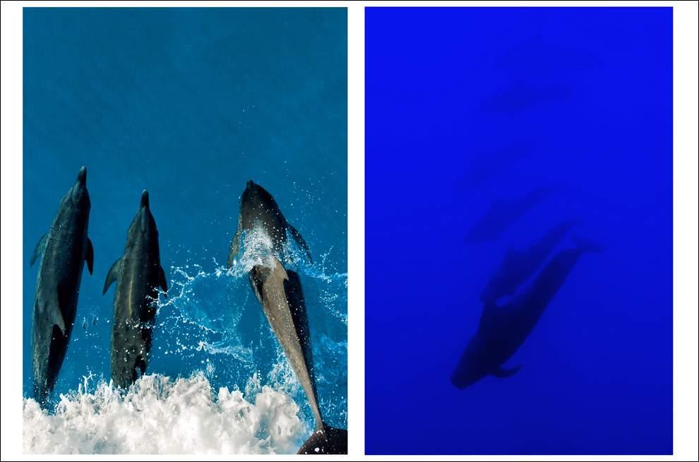 Удивительные обитатели морского царства рыб