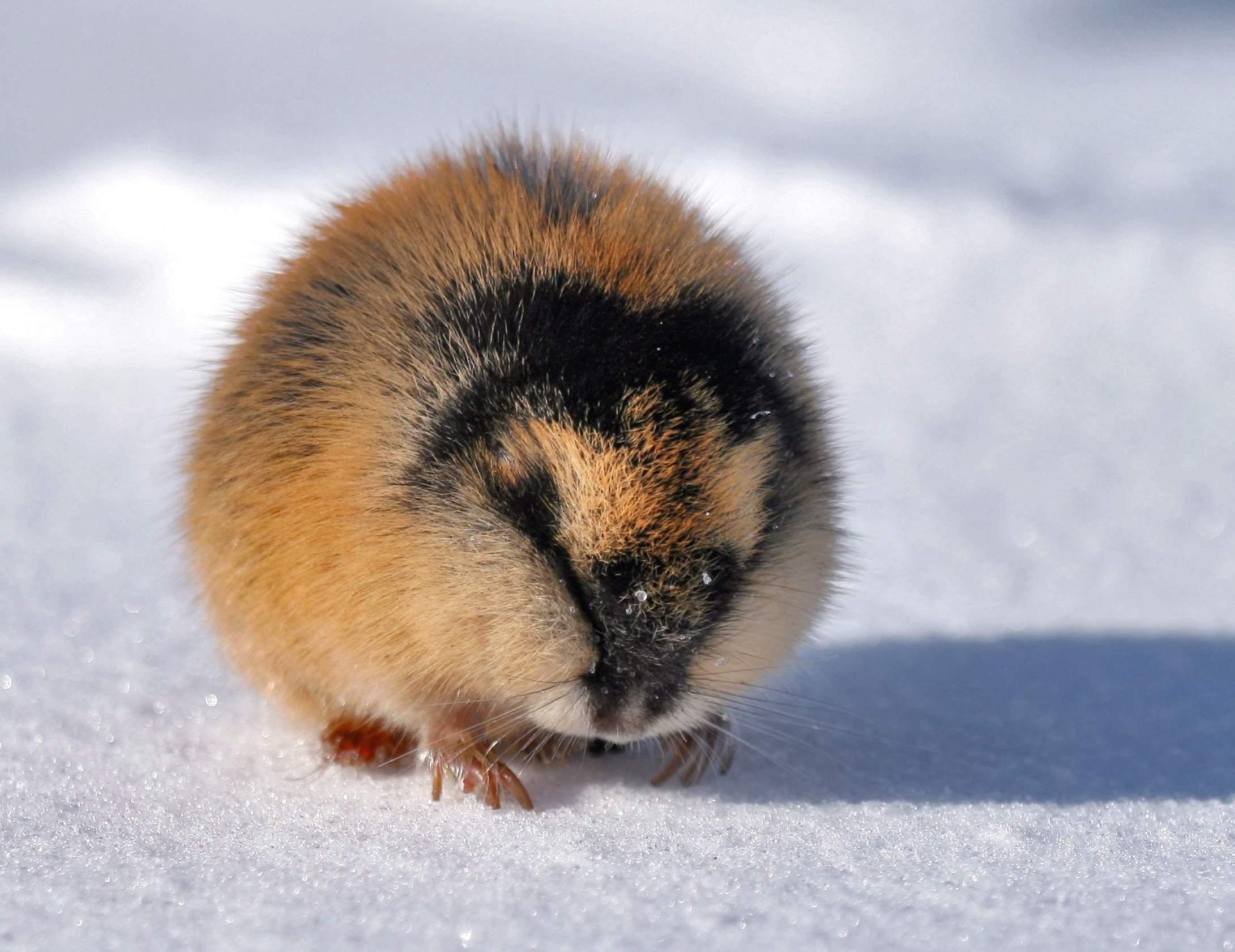 1. Существуют животные, которые могут соперничать с кроликами по части