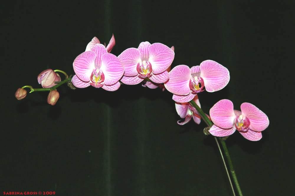 Рекорды растительного мира