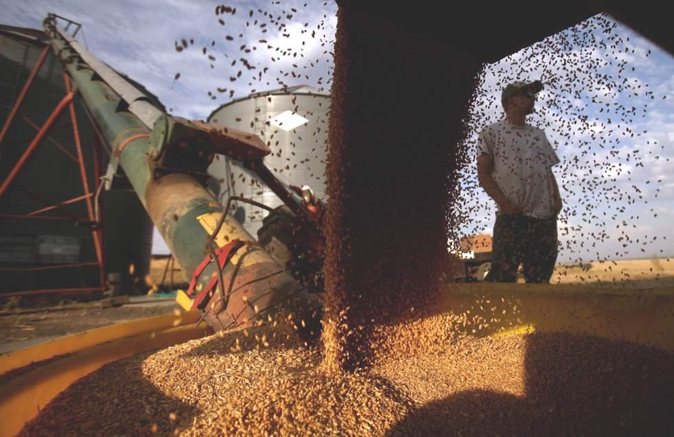 Осень — горячая пора сбора урожая