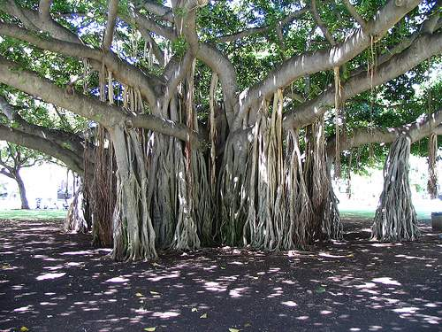 Деревья всегда притягивали внимание человека. Это и укрытие в непогоду или жару, и питание, и защита.