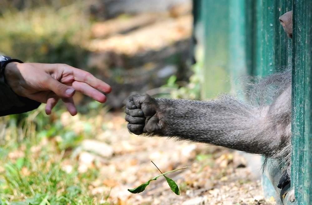 Интригующая сцена в Братиславском зоопарке