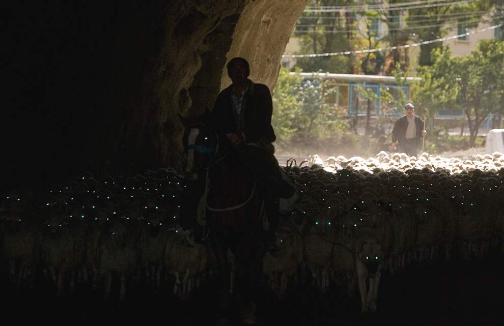 Отара овец в туннеле, Владикавказ © Kazbek Basayev, Reuters