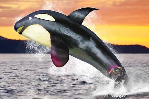 Дельфин из баклажана поделка