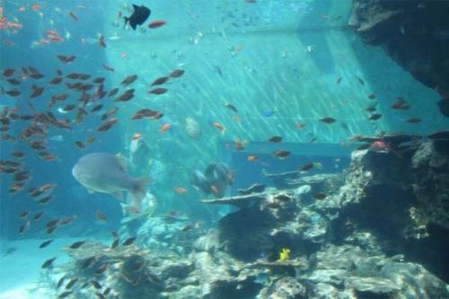 """Хотя кажется, что панель аквариума """"Куросио-но уми"""" не имеет соединительных швов"""