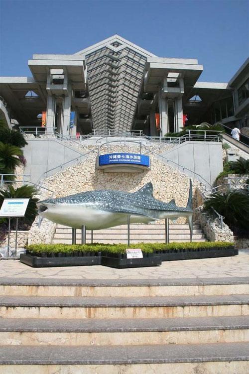 Он является частью Океанического выставочного парка в Мотобу, который открыли в 2002 году…