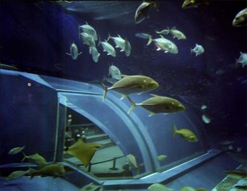 Войдя в океанариум, посетитель оказываетесь на третьем этаже здания и затем начинает постепенно спускаться вниз, как бы погружаясь все глубже и глубже в море,