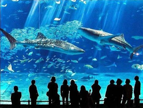 Этот фантастический подводный мир и посетителей разделяет самая большая в мире акриловая панель размером 60 сантиметров толщиной...