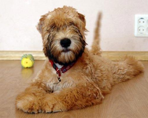 Средний вес взрослой собаки 15 18 кг как