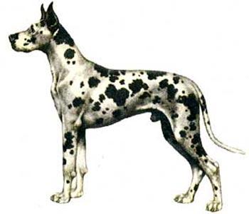 Собаки рекордсмены 52055