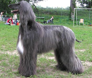 Собаки рекордсмены 52058