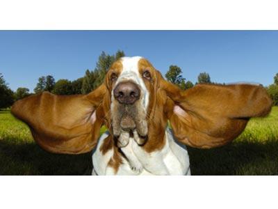Собаки рекордсмены 52123