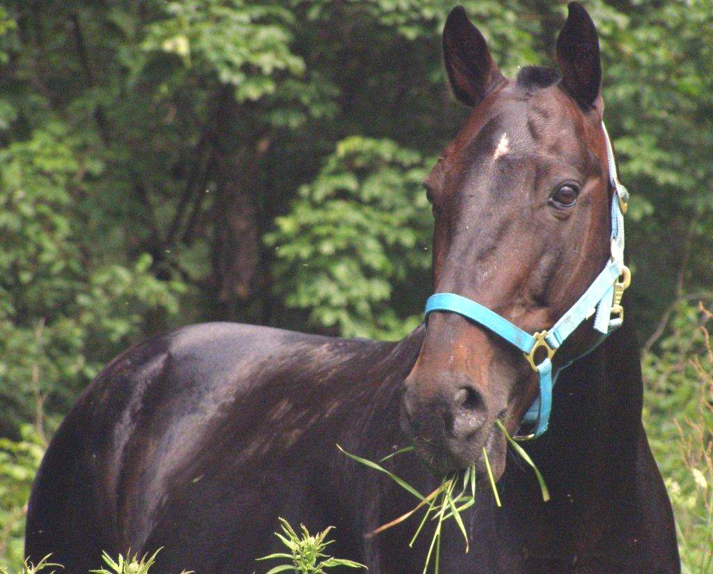 Лошадь - священное животное двадцати трех народностей.