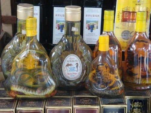 Для изготовления змеиного вина используются кобры и другие редкие вымирающие виды змей.
